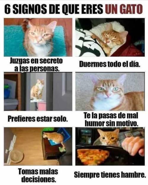 Señales de que eres un gato