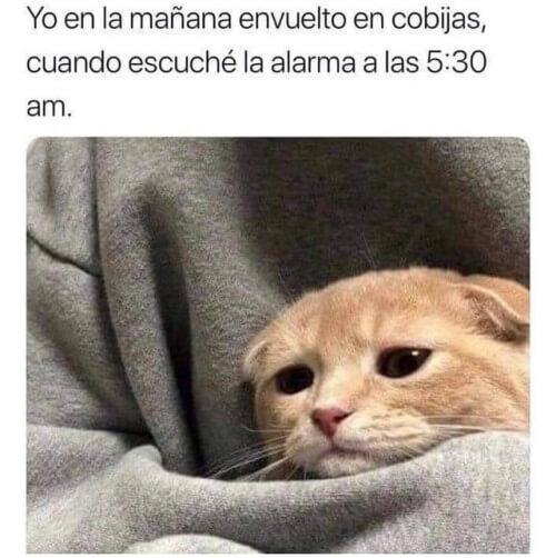 Yo en las mañanas