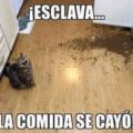 Cuando el gato tiene hambre