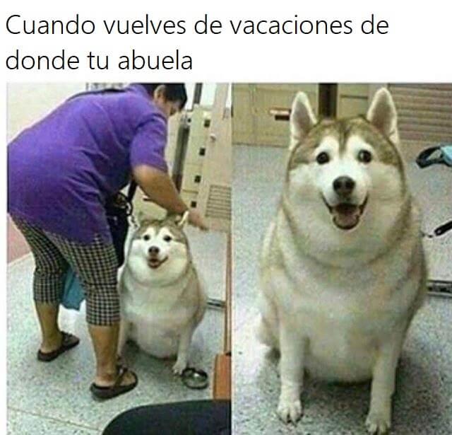 Cuando vuelves de las vacaciones