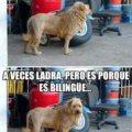 Vendo Leon