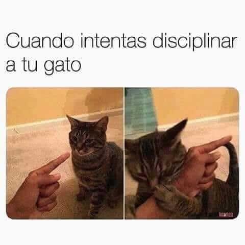 Cuando intentas disiplinar al gato