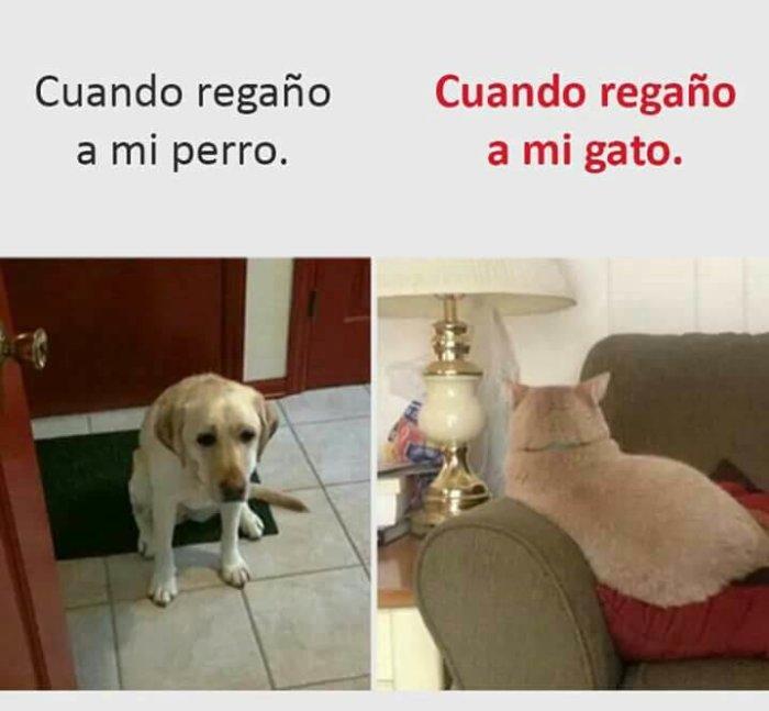 Cuando regañas al perro