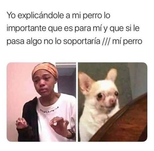 Explicandole a mi perro lo importante que es