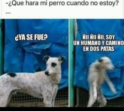 Mi perro cuando no estoy