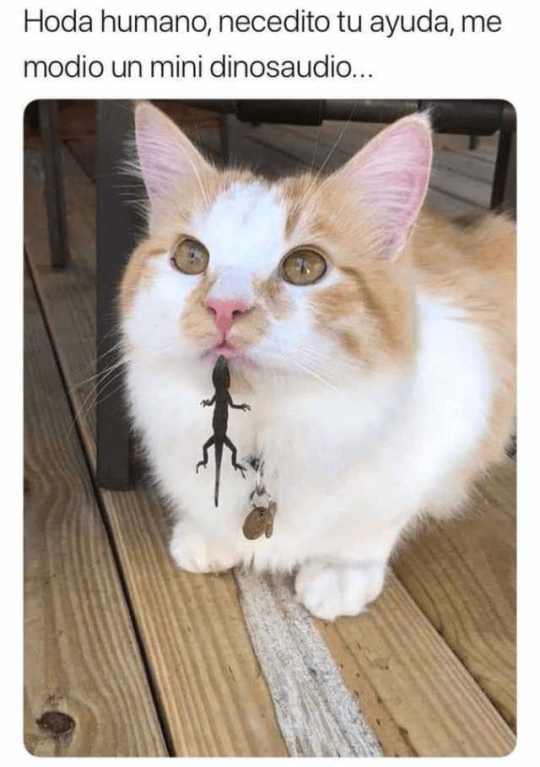 Cuando el gato pide ayuda