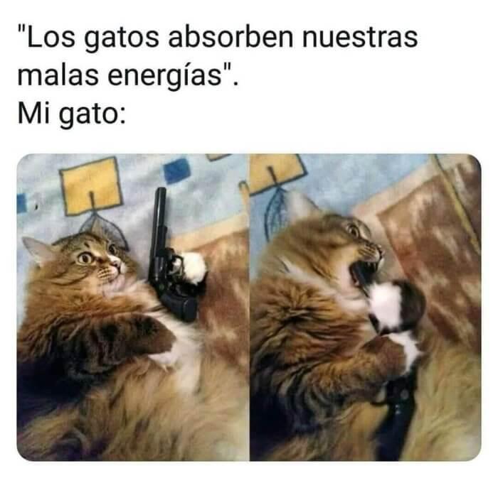 Los gatos absorben las malas energias