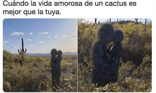 Cuando la vida amorosa de un cactus