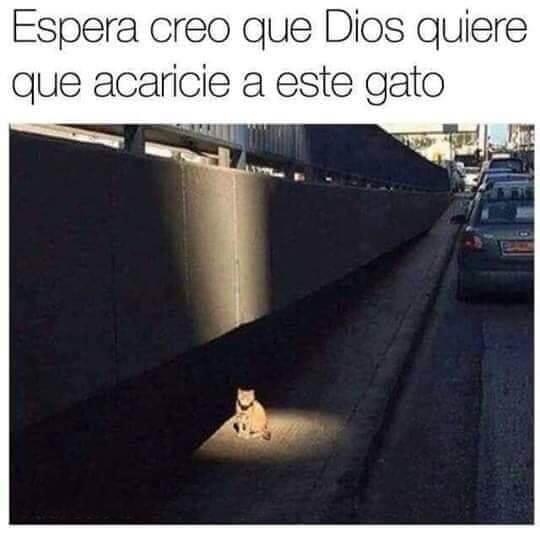 Dios quiere que acarie a este gato