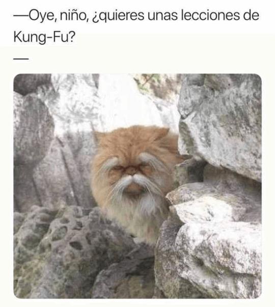 Lecciones de Kun-fy