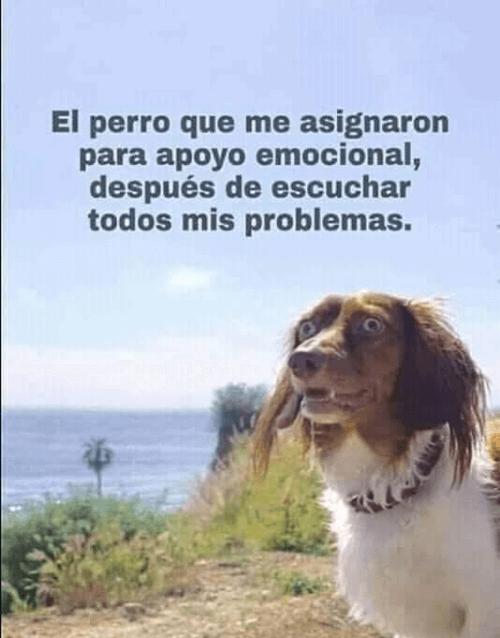 Por apoyo emocional