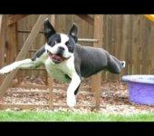 Cuando a tu perro se le olvida como saltar