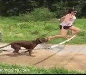 Cuando el perro deja de ser tu mejor amigo