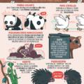 Las peores historias de amor del reino animal