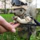 Sargento ardilla