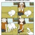 Intentando pasar el rato con un gato
