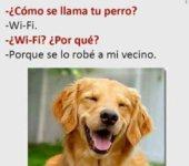 Mi perro se llama Wi-Fi
