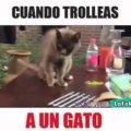 Cuando trolleas a un gato