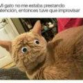 Cuando tu gato no presta atención