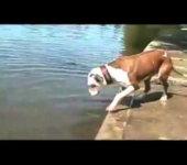 El perro mas torpe del mundo