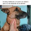 Le hablo a mi perro en italiano