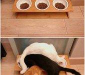 Orden de gato